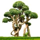被隔绝的盆景室内植物 免版税库存图片