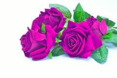 被隔绝的紫色玫瑰人为背景 图库摄影