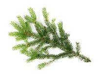 被隔绝的绿色云杉的枝杈 库存照片