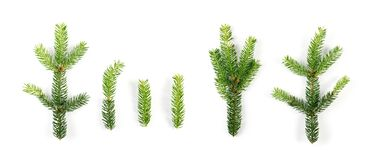 被隔绝的绿色云杉的枝杈 库存图片
