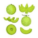 被隔绝的绿色瓜果子 免版税图库摄影
