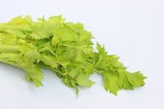 被隔绝的绿色芹菜叶子 免版税库存照片