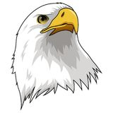 被隔绝的老鹰吉祥人头 库存图片