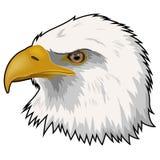 被隔绝的老鹰吉祥人头 免版税库存图片
