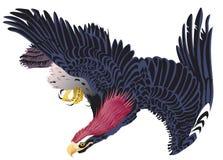 被隔绝的老鹰在颜色飞行 免版税库存照片