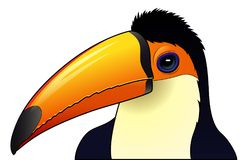 被隔绝的逗人喜爱的toucan动画片 免版税图库摄影