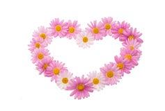 被隔绝的一朵桃红色雏菊的花 库存照片