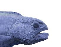 被隔绝的一条蓝色海洋鱼的头 库存图片