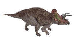 被隔绝的三角恐龙 库存图片