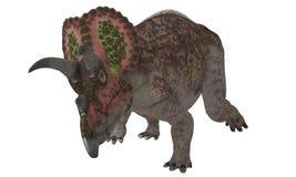 被隔绝的三角恐龙 图库摄影