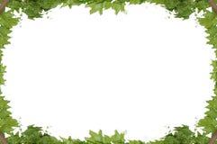 被隔绝的上升的植物的框架  免版税库存照片