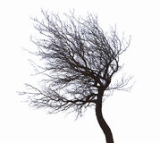 被隔绝的不生叶的树 免版税图库摄影