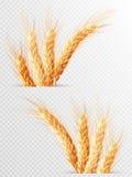 被隔绝的两个麦子耳朵 10 eps 图库摄影