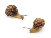 被隔绝的两只蜗牛 库存图片