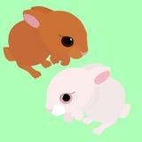 被隔绝的兔子,白色和棕色动画片动物 免版税库存图片