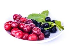 被隔绝的全部莓果 免版税库存图片