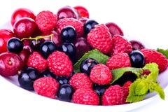 被隔绝的全部莓果 免版税库存照片