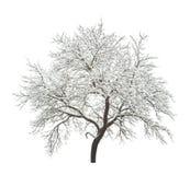 被隔绝的冬天树 库存照片
