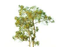 被隔绝的分支树 库存图片