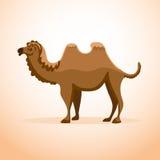 被隔绝的动画片骆驼 库存例证