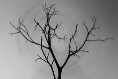 被隔绝的单独树剪影  库存照片