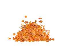 被隔绝的叶子堆 库存照片