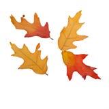 被隔绝的四片秋天叶子 免版税库存照片