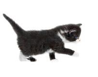被隔绝的小的逗人喜爱的小猫 免版税库存图片