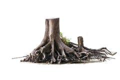 被隔绝的干树 免版税库存图片