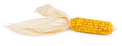 被隔绝的干玉米棒玉米 免版税库存照片