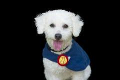 被隔绝的愉快的狗 免版税库存图片