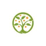 被隔绝的抽象圆形绿色,橙色颜色树商标 自然元素略写法 叶子和树干象 公园或 免版税库存照片