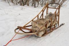 被隔绝的拉雪橇狗在冬时的拉普兰 免版税图库摄影