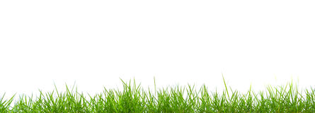 被隔绝的新春天绿草全景 免版税图库摄影
