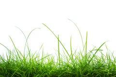 被隔绝的新春天绿草全景 库存照片