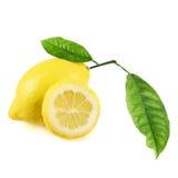被隔绝的新鲜的柠檬果子 库存照片