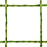 被隔绝的新鲜的竹子 免版税库存图片
