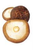 被隔绝的新鲜的什塔克菇 免版税库存照片