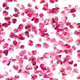 被隔绝的无缝的罗莎玫瑰花瓣 免版税图库摄影