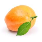 被隔绝的杏子 免版税库存图片