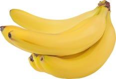 被隔绝的束黄色成熟香蕉 免版税库存图片