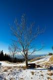 被隔绝的树在一个冷的12月早晨 库存照片