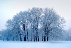 被隔绝的树在公园在冬天 免版税库存照片