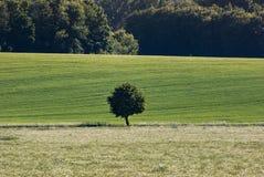 被隔绝的树在土地 库存图片