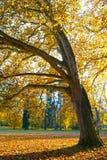 被隔绝的树在秋天天 免版税图库摄影