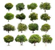 被隔绝的树的汇集在白色背景的 免版税库存图片