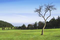 被隔绝的树 图库摄影