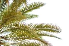 被隔绝的棕榈叶 图库摄影