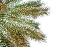 被隔绝的棕榈叶 免版税图库摄影