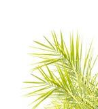 被隔绝的棕榈叶 免版税库存图片